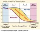 population-transition-demographique-theorique-graphique